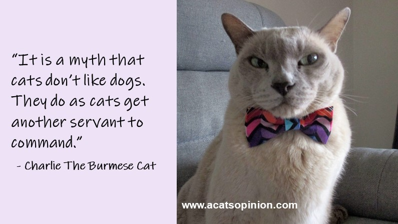 Cat Sets The Record Straight About Dogs