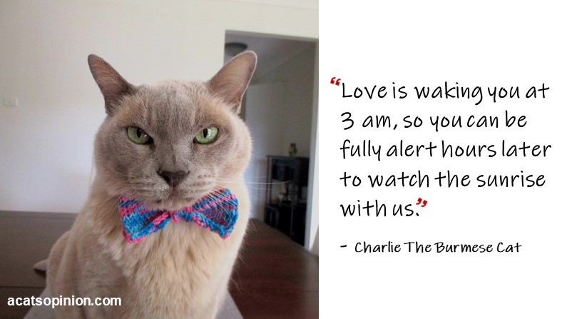 The Secret Reason Why Cats Wake Their Humans Early